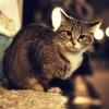 [画像あり]中華料理屋の前にいた猫が激写されるwwwwwww弁当を注文してるみたい!
