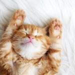 [猫好き歓喜]モロッコと猫のコラボ画像を貼ってくぞ!