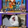 [炎上]フジテレビで「歌うネコ」の動画を紹介→虐待疑惑で市役所が調査へ!!!!!