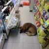 [画像あり]このコンビニ、犬がスヤッスヤで居座るwwwwwwwwwwwwww