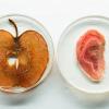 [驚愕]人間の細胞をリンゴに移植した結果・・・!!!(画像あり)
