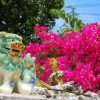 [画像あり]沖縄の女で打線組んだwwwwwwwwwwwwwwwwwwwwwwwwwwwwwwww
