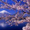 日本人「日本の四季は素晴らしい」←これ