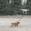 [GIF画像]ドローンで犬を散歩する動画がやばすぎるwwwwwwwwww