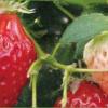 LINEのプロフィール画像でわかる性格wwwww